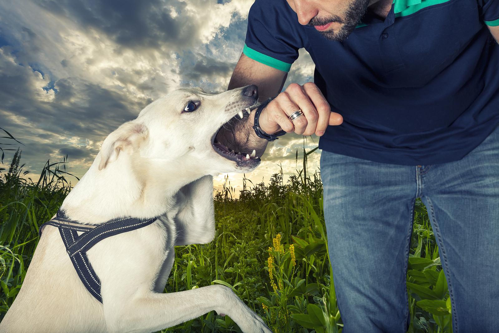 Dog Bites Attorney Columbia
